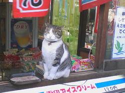 cat 017.jpg